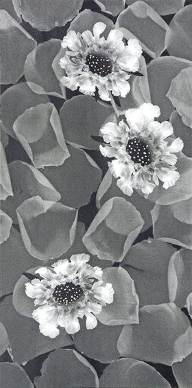 (DELFİNA) Granit-Seramik Dekor BC-306012